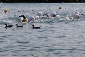 Schwimmen: Uberquerung des sees